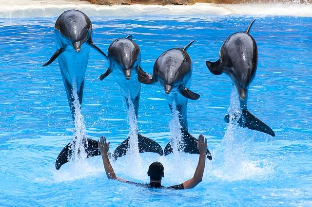 イルカがジャンプしている夢占い