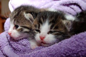 猫の夢占い