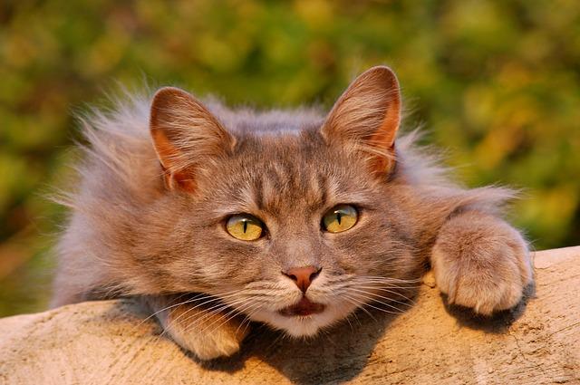 猫に噛まれる夢占い