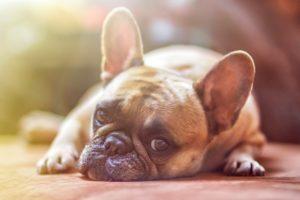 犬の夢占い