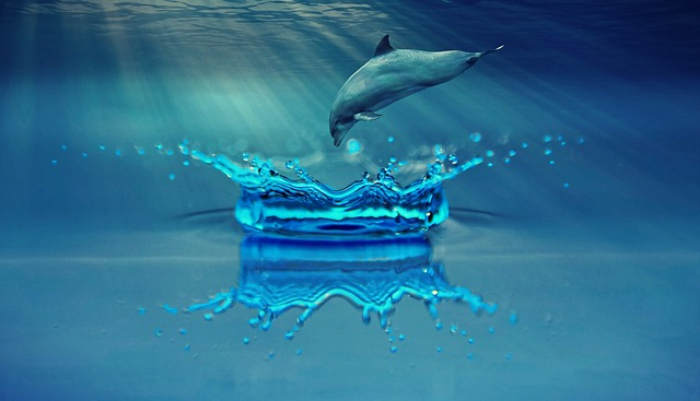 イルカの夢占い