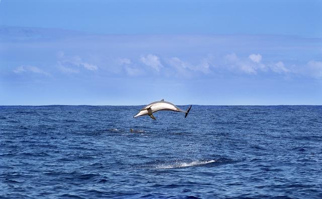 イルカが大海原を泳ぐ夢占い