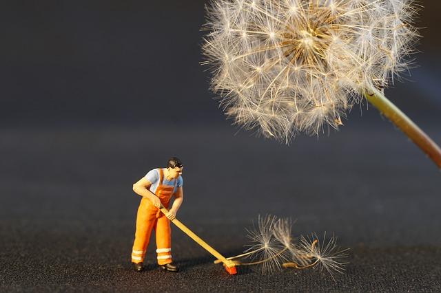 蜘蛛の巣を掃除する夢占い