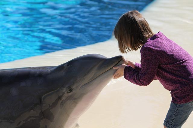 イルカと話す夢占い