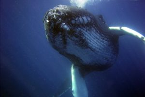 クジラの夢占い