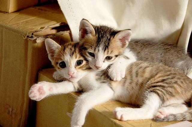 猫の赤ちゃん(子猫)の夢占い