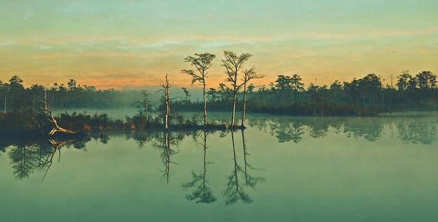 沼の夢占い