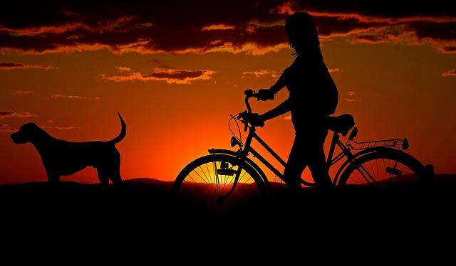 犬と散歩する夢占い