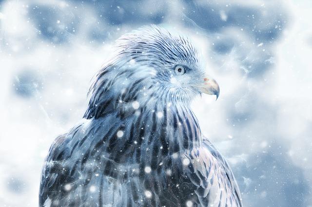 白い鷹(白鷹)の夢