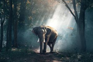象の夢占い
