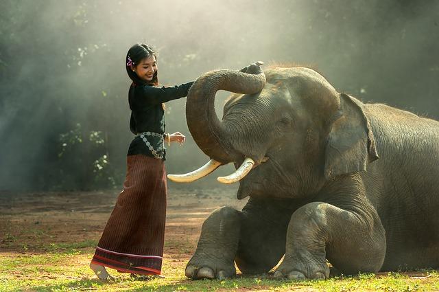 象に乗る夢占い