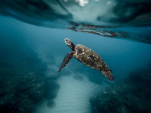 亀が泳いでいるところを見る夢占い