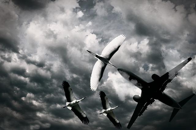 飛行機が墜落・飛行機が落ちるのを目撃する(見る・眺める)夢占い