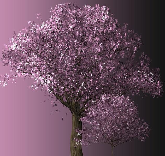 桜が満開に咲き誇る夢占い