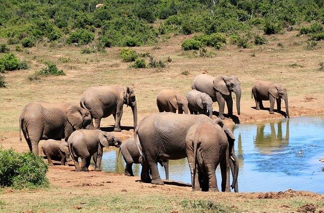 象が水浴びしている夢占い