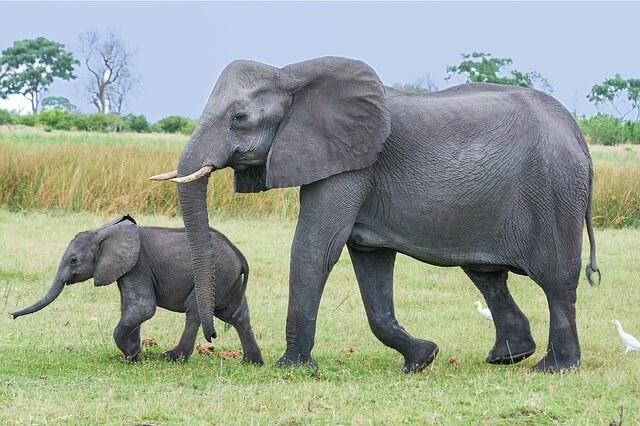 象の親子を見る夢占い