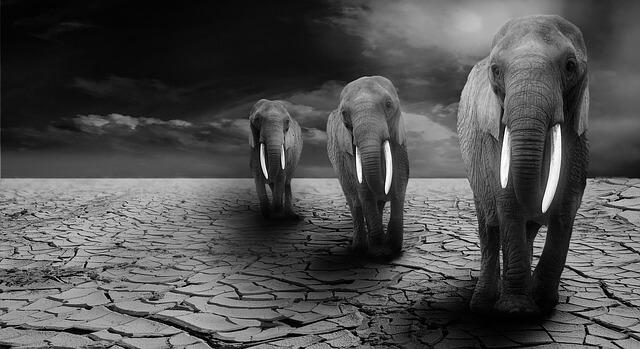 象が死ぬ、死んでいる象の夢占い