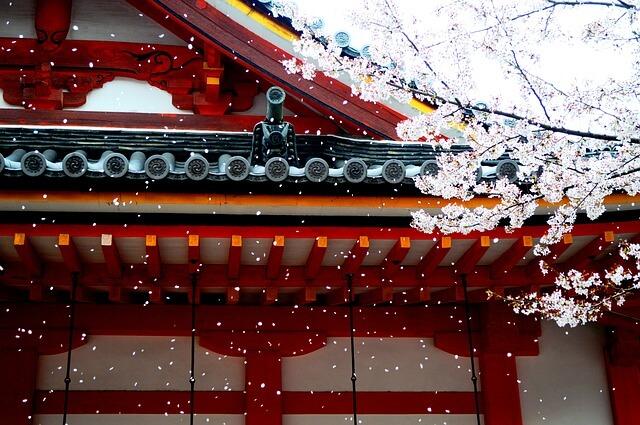 桜に雪が舞い落ちる夢占い