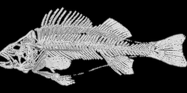 透明な魚の骨を見る夢、魚の骨を見る夢占い