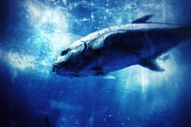 魚に飲み込まれる夢、魚に食べられる夢占い