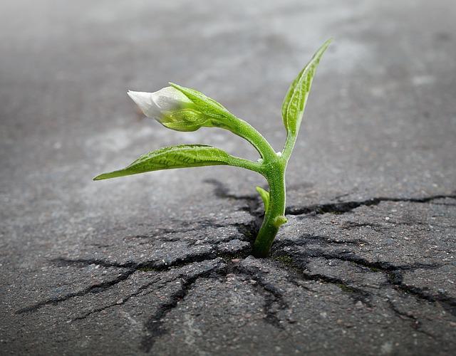 地震で地盤沈下する夢・地震で地割れする夢占い