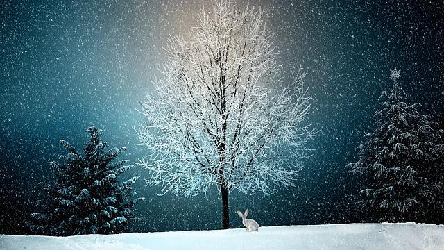雪の夢占い