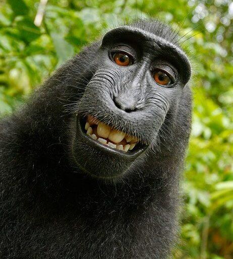 猿と話す夢占い